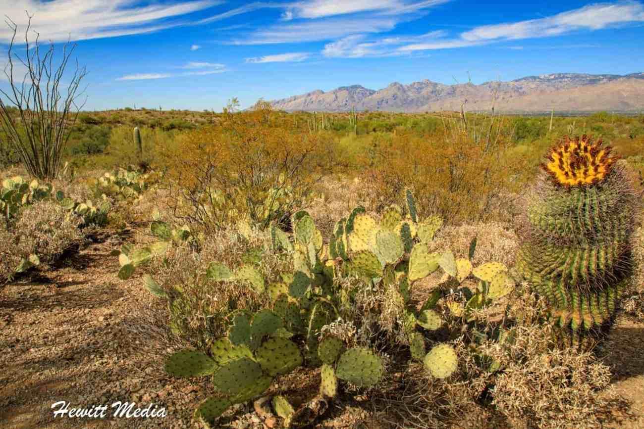 Saguaro National Park-5990