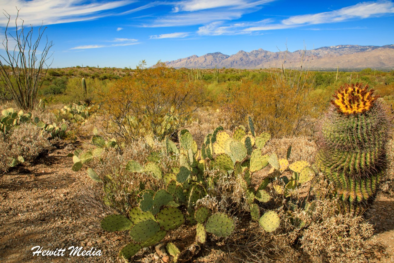 Saguaro National Park-5990