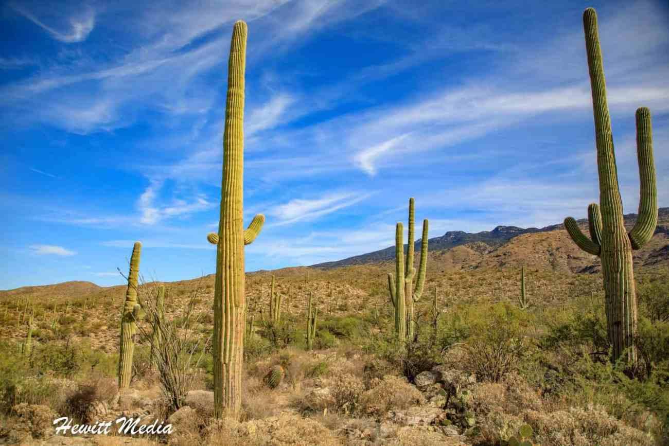 Saguaro National Park-6001