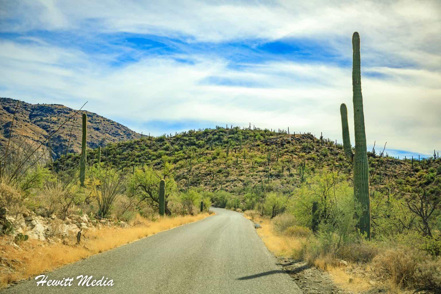 Bajada Loop Drive in Saguaro National Park
