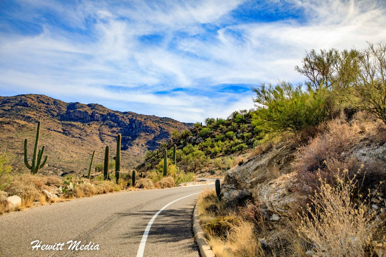 Saguaro National Park-6004.jpg