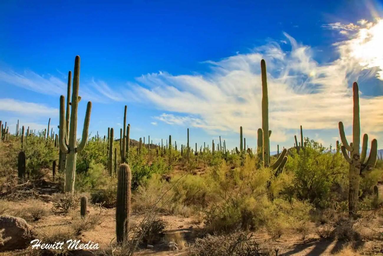 Saguaro National Park-6059