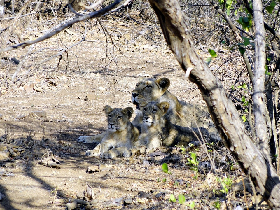 Gir National Park.jpg