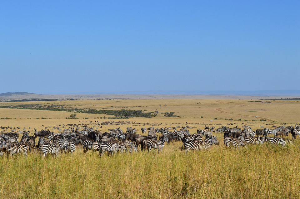 Masai Mara.jpg