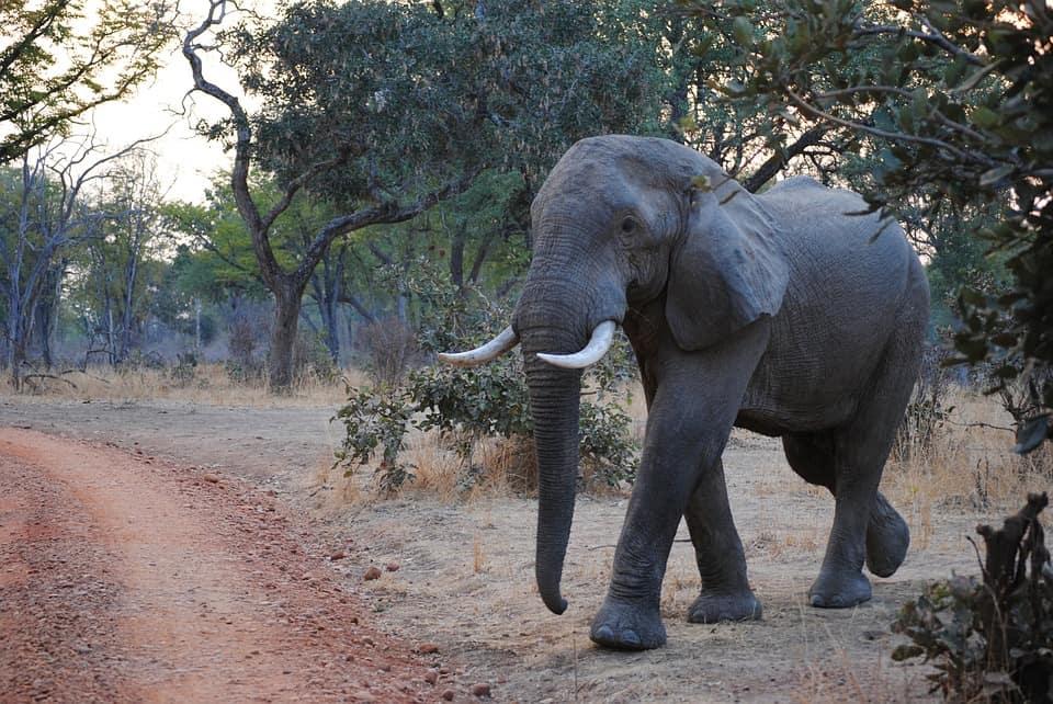 South Luangwa National Park.jpg