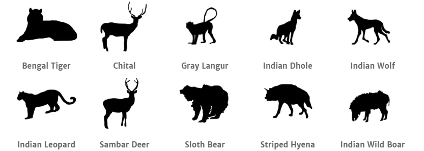 Bandhavgarh National Park animals.png