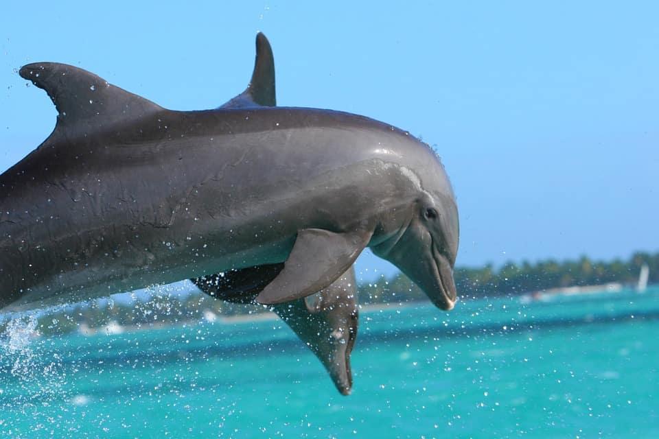dolphin-855574_960_720