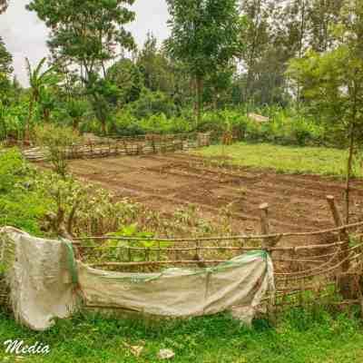 A farmer's field near the coffee plantation