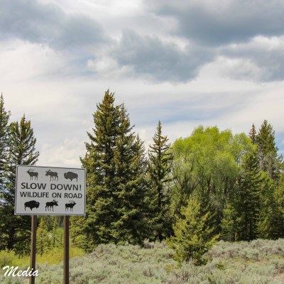 Wildlife Sign in Grand Teton National Park