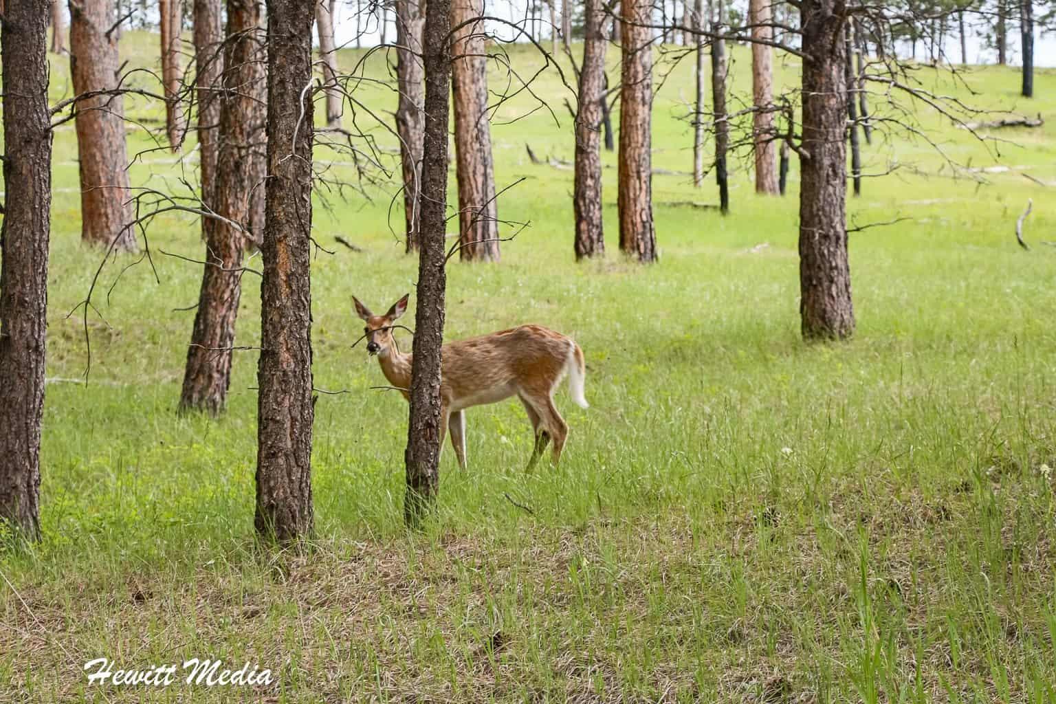 Deer near Devil's Tower National Monument