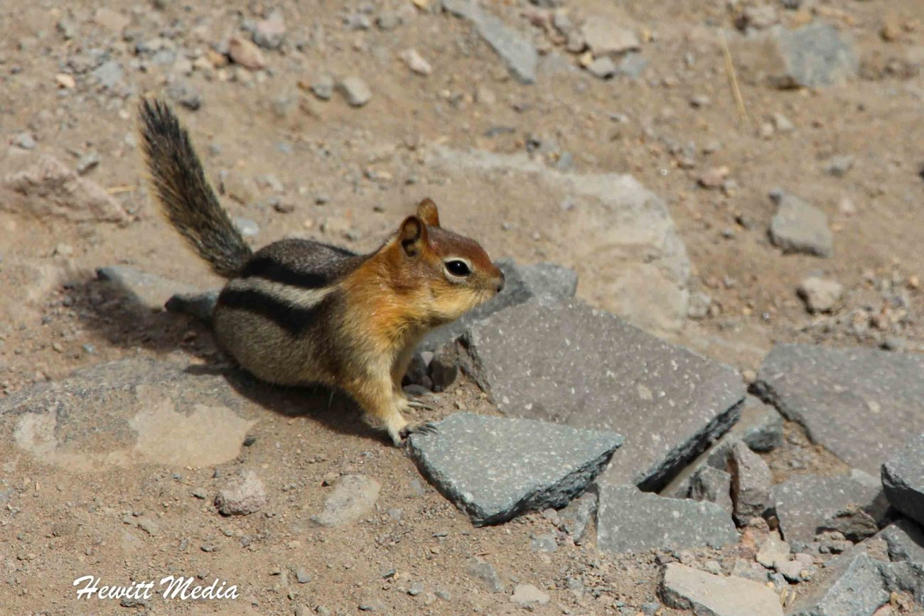 Crater Lake National Park-1-25