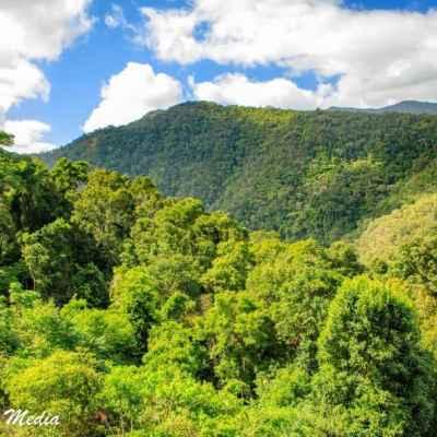 Kuranda Rainforest-2295