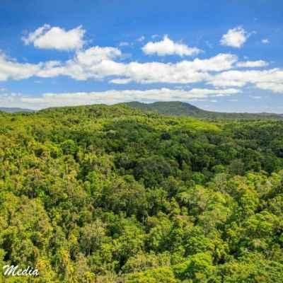 Kuranda Rainforest-2415