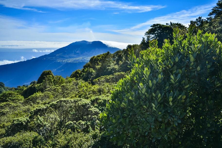 Top 2021 Travel Destinations - Costa Rica Rainforest