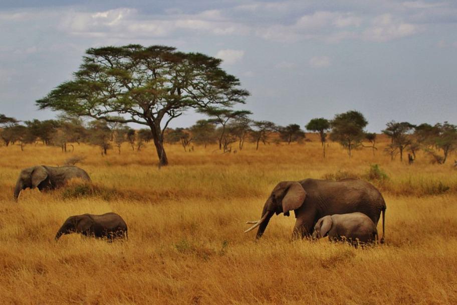 Tanzania Safari Itinerary - Ruaha National Park