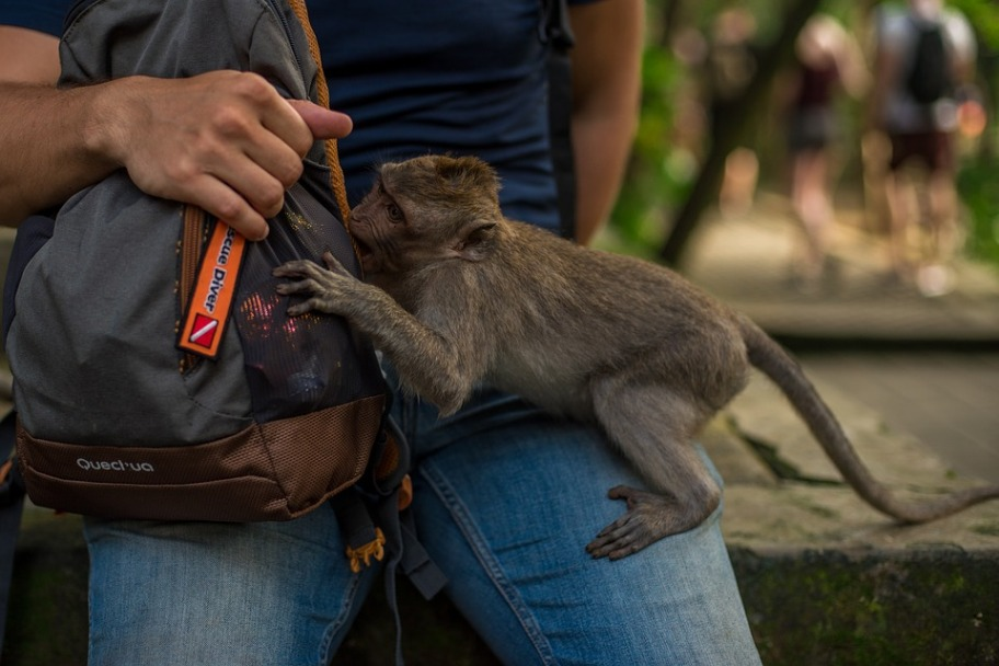 Rabies Vaccination for Travel