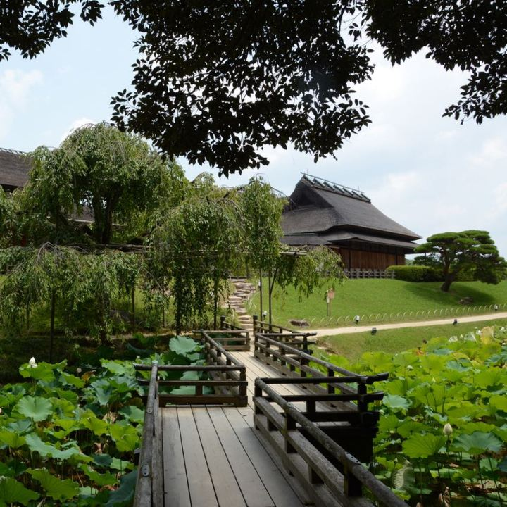 Okayama garden korakuen lotus pond