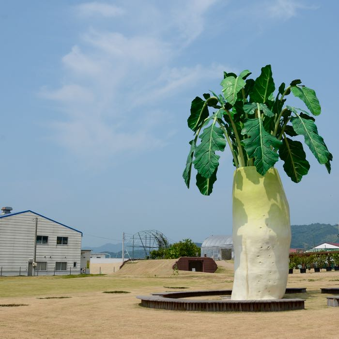 innoshima shimanami kaido cycle path giant radish