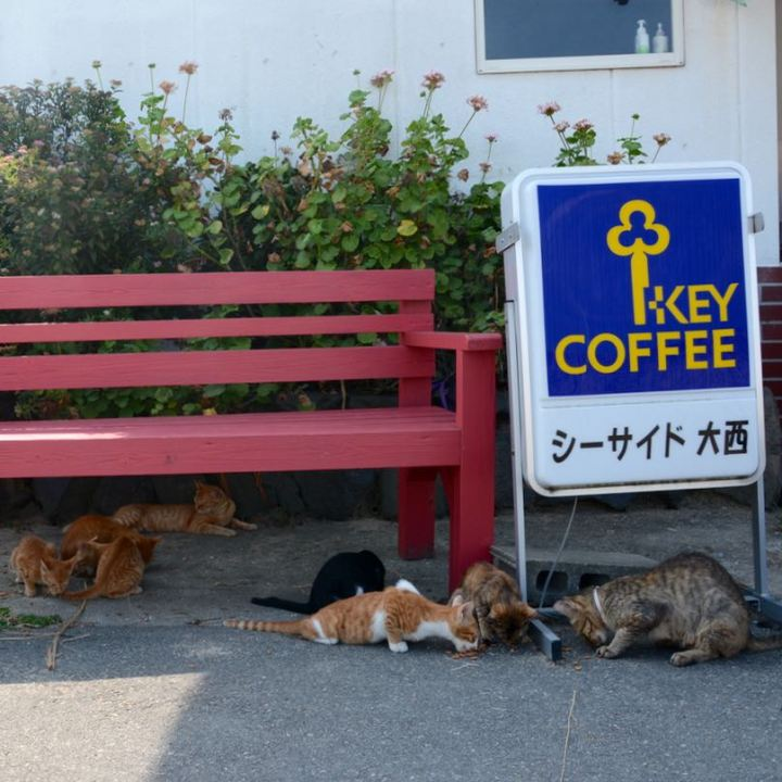 teshime ieura cat cafe