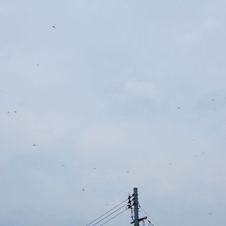 teshima ieura setouchi tirennale dragon flies