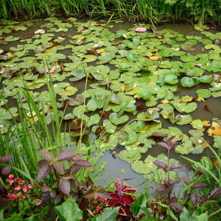 naoshima honmoura setouchi tirennale monet garden