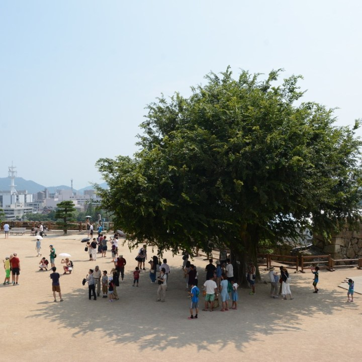 himeji castle architecture main keep ground tree