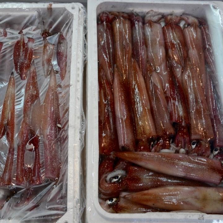 Tsukiji tokyo fish market squid