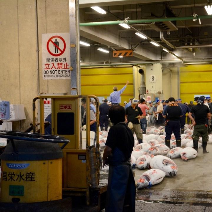 Tsukiji tokyo fish market tuna auction