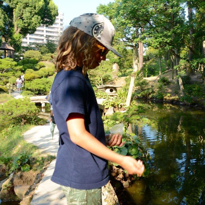 Hiroshima Shukkeien japanese garden lake feeding fish