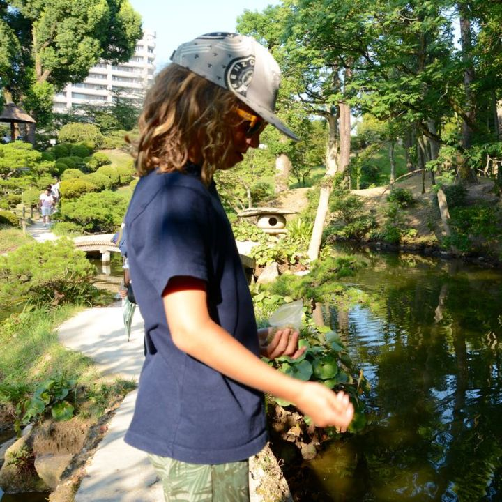 Hiroshima Shukkeien japanese garden lake feeding fish