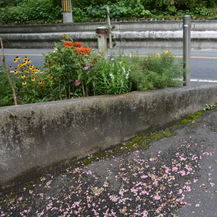 tama river cycling roadside flowers