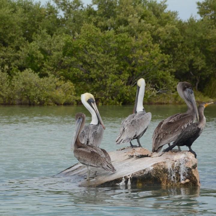 Travel with children kids mexico rio lagartos  birds