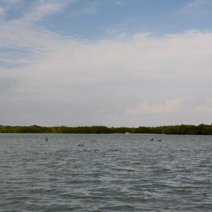 Travel with children kids mexico rio lagartos birds water