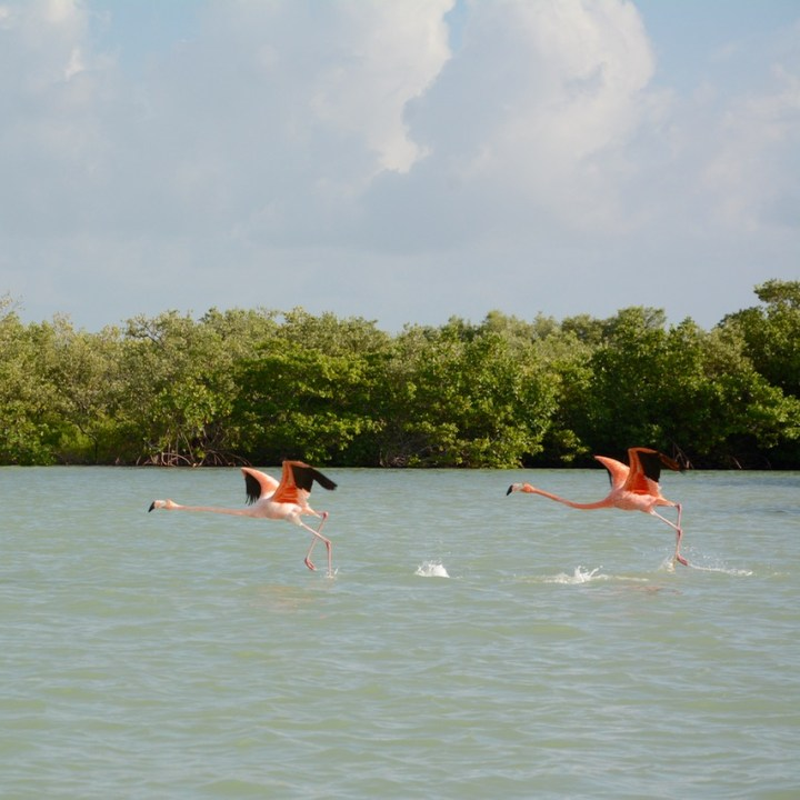 Rio Lagartos, Mexico | Exciting Boat Safari to See Flamingoes and Other Birds Among the Rio Lagartos Mangroves