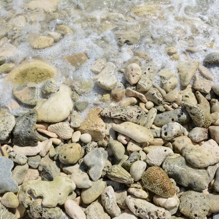 Travel with children mexico akumal turtle beach