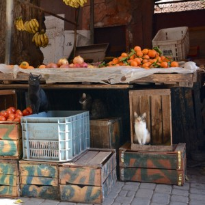 travel with children kids morocco marrakech souk cats