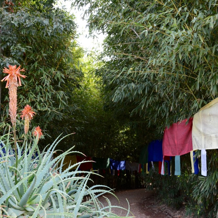 travel with children kids marrakech morocco anima garden andre heller bamboo grove