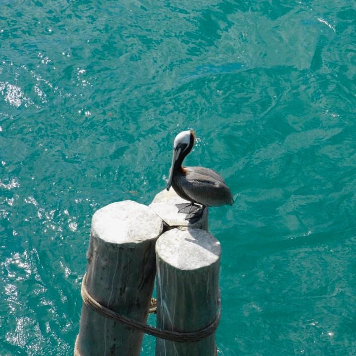 travel with kids children miami usa virginia key beach pelican