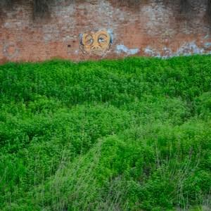 Travel with kids children pisa italy graffiti streetart