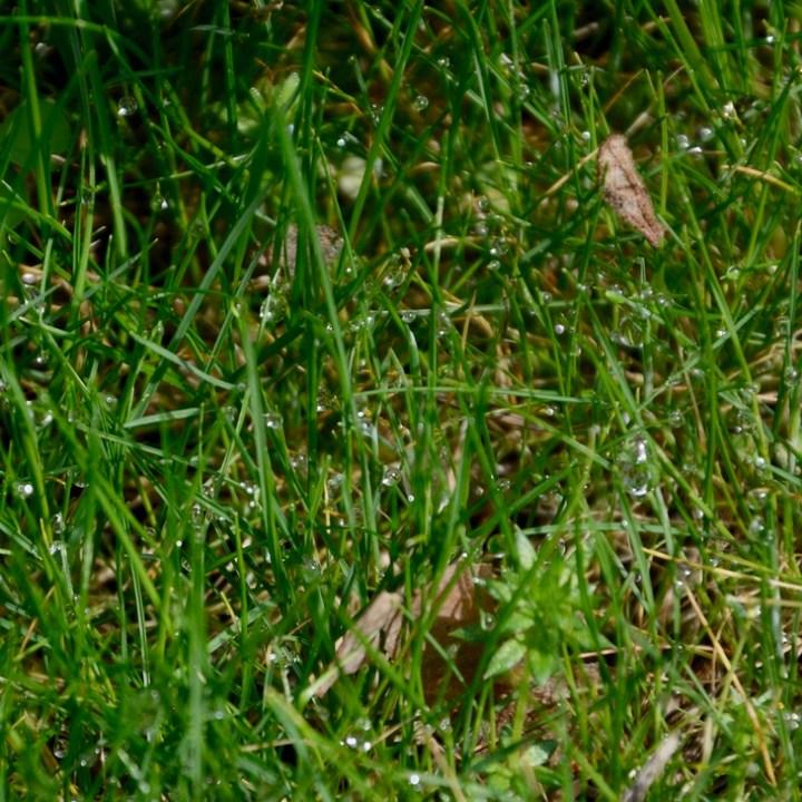 travel with kids children pisa italy nature park Migliarino grass
