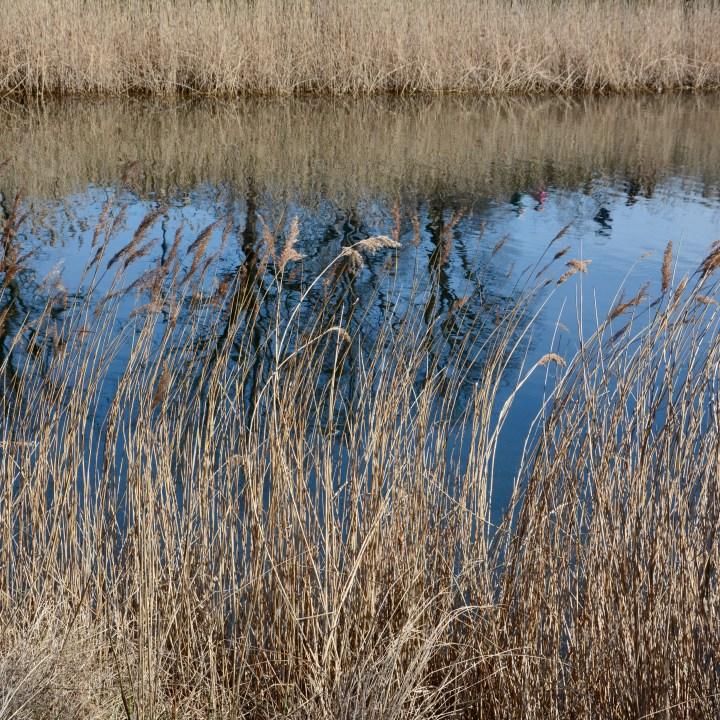travel with kids children copenhagen denmark christianshavn lake reeds