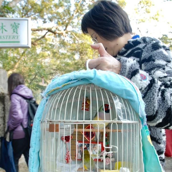 travel with kids children hong kong lantau big buddha bird cage