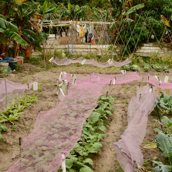 travel with kids children peng chau hong kong vegetable farm