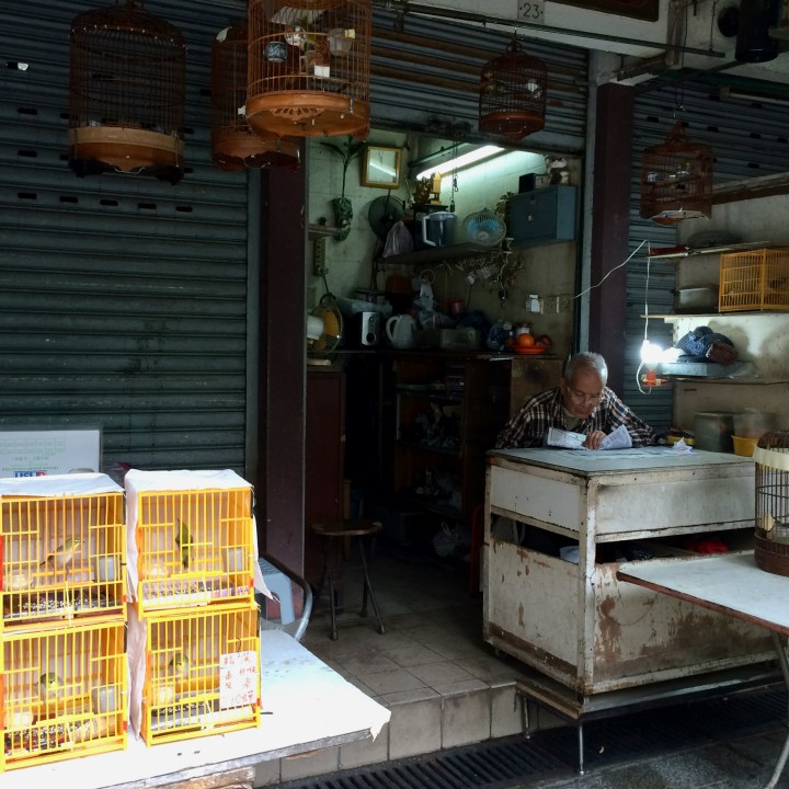 hong kong with kids children kowloon yuen po bird garden shop
