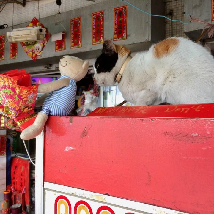 travel with kids children cheung chau island hong kong cat