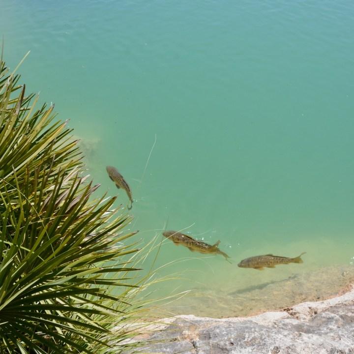 travel with kids children mallorca spain raixa estate large pond fish