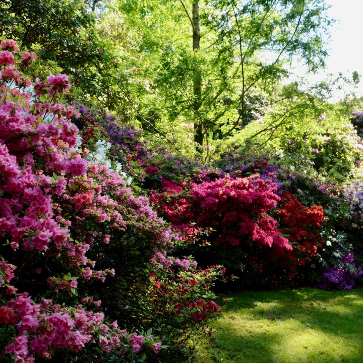 travel with kids children isola madre lago maggiore italy garden rhododendron