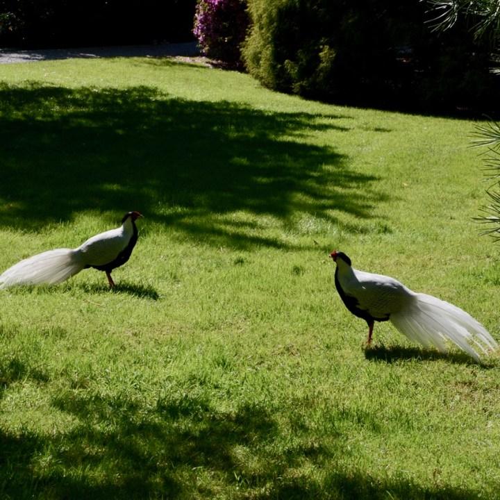 travel with kids children isola madre lago maggiore italy garden aviarium