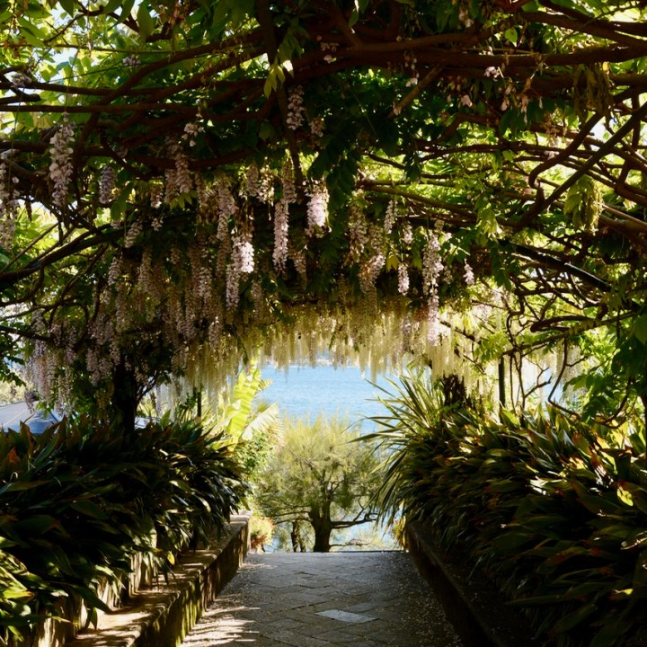 Isola Madre, Lago Maggiore, Italy | Exploring the Charming Botanical Gardens of Isola Madre