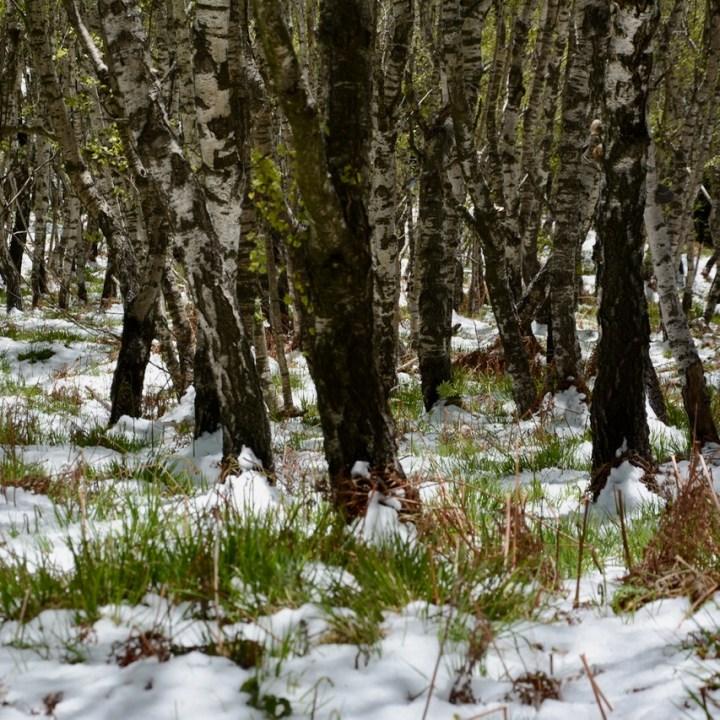 travel with kids children mount spalavera lago maggiore hiking snow birch